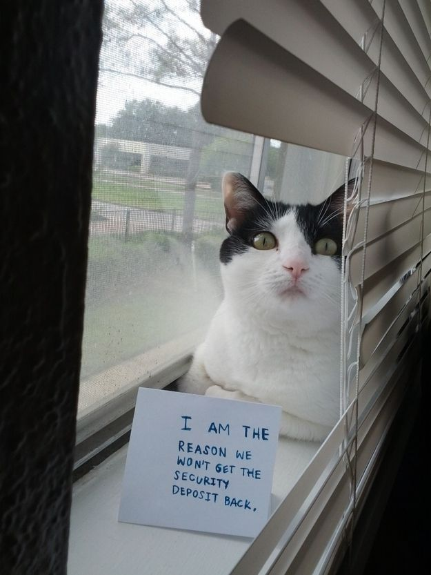 Pets Love Window